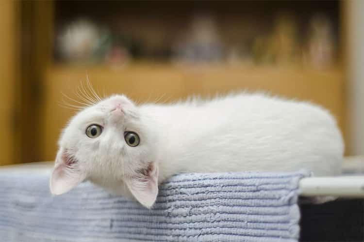 camera pour chat collier surveiller chat conseils